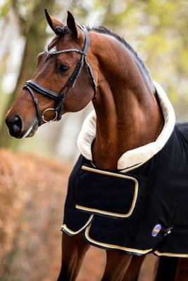 Dutch Crown black